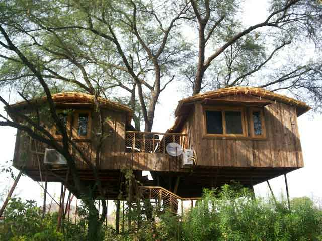 Отель Manali Tree House Cottages.jpg