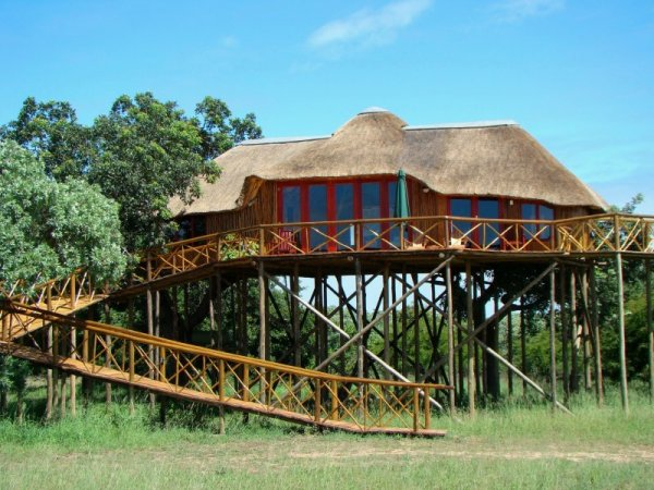 Отель Pezulu Tree House Game Lodge.jpg